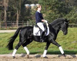 dressage horse FS Pour l'Amour (German Riding Pony, 1994, from FS Picasso)