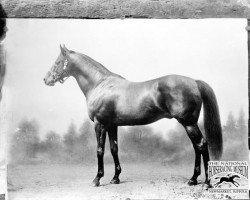 horse Ayrshire xx (Thoroughbred, 1885, from Hampton xx)