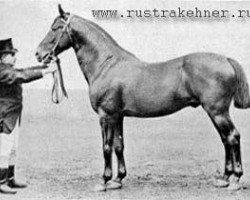horse Elfenbein (Trakehner, 1879, from Marsworth xx)