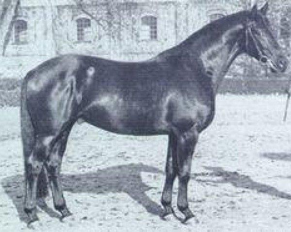 horse Garamond (Trakehner, 1963, from Gabriel)