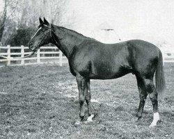 horse Bishop's Rock xx (Thoroughbred, 1929, from Teddy xx)