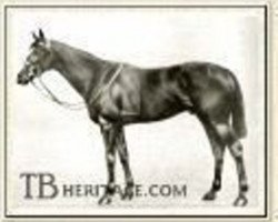 horse Bachelor's Double xx (Thoroughbred, 1906, from Tredennis xx)