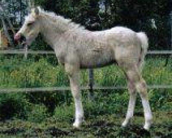 dressage horse Monte Miro (German Riding Pony, 2004, from Monte Christo)
