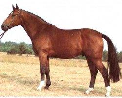 horse Wanderer (Hanoverian, 1980, from Wagner)