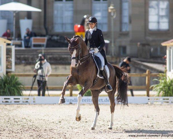 dressage horse Fano 3 (Hanoverian, 2010, from Fiorano)