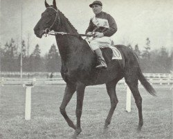 horse Prince Rose xx (Thoroughbred, 1928, from Rose Prince xx)