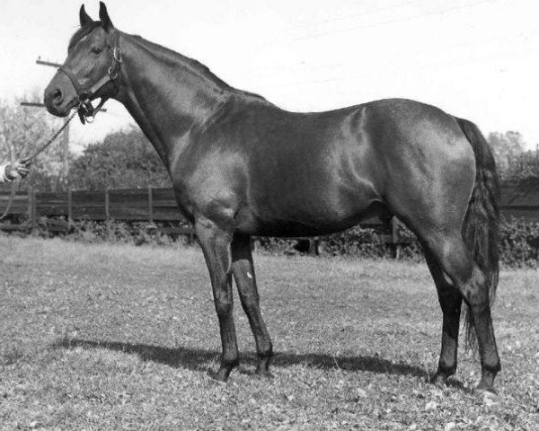 horse Princequillo xx (Thoroughbred, 1940, from Prince Rose xx)