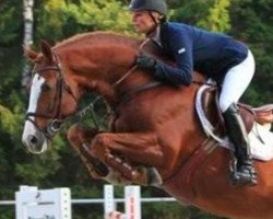 jumper Valentino (Royal Warmblood Studbook of the Netherlands (KWPN), 2002, from Now Or Never M)