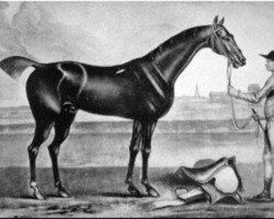 horse Bay Bolton xx (Thoroughbred, 1705, from Grey Hautboy xx)