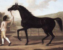 horse Oroonoko xx (Thoroughbred, 1745, from Crab xx)