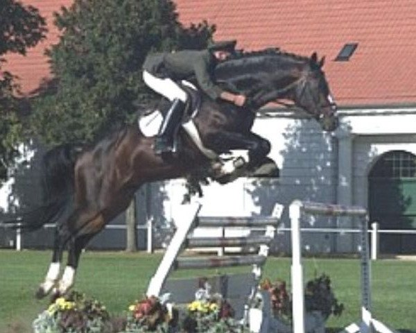 horse Continue (Oldenburg, 1990, from Contender)