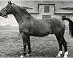 horse Fluegeladjutant (Hanoverian, 1938, from Fluegelmann I)