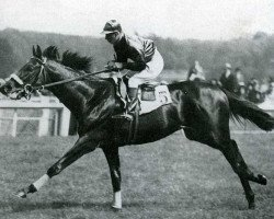 horse Mieuxce xx (Thoroughbred, 1933, from Massine xx)