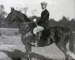 horse The Last Orange AN (Selle Français, 1941, from Orange Peel xx)