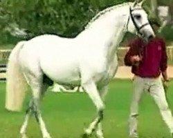 horse Carolus I (Holsteiner, 1986, from Capitol I)
