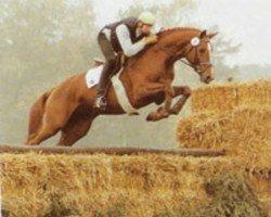 horse Good Year (Westphalian, 1992, from Goodwill)