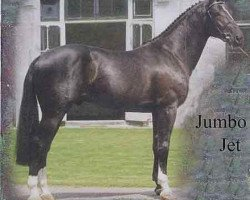 horse Jumbo-Jet (Royal Warmblood Studbook of the Netherlands (KWPN), 1991, from Concorde)