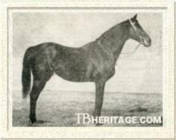 horse Havresac II xx (Thoroughbred, 1915, from Rabelais xx)