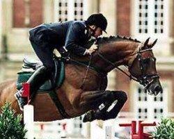horse Lancer III (Holsteiner, 1990, from Landgraf I)