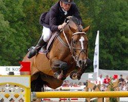 horse Orlando van de Heffinck (Belgian Warmblood, 1996, from Heartbreaker)