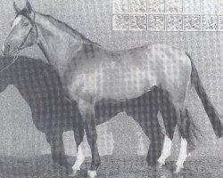 horse Diamant (Hanoverian, 1978, from Diplomat)