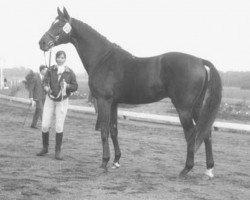 horse Talisman xx (Thoroughbred, 1955, from Transtevere xx)