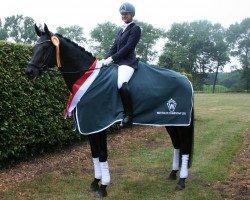 dressage horse Rocky Lee (Westphalian, 2007, from Rock Forever NRW)