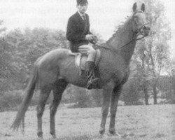 horse Koridon xx (Thoroughbred, 1946, from Karamont xx)