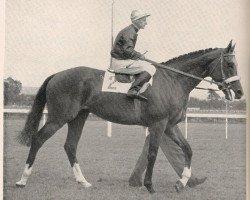 horse Oliveri xx (Thoroughbred, 1953, from Macherio xx)