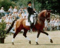 horse Vincent (Royal Warmblood Studbook of the Netherlands (KWPN), 1979, from Pretendent)