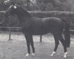 horse Arlinus (Westphalian, 1989, from Artwig)