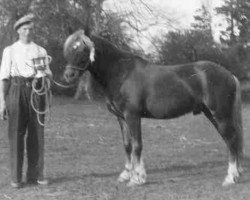 horse Broomy Slip-On (New Forest Pony, 1948, from Telegraph Rocketer)