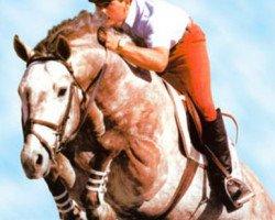 horse Spartan (Hanoverian, 1982, from Servus)