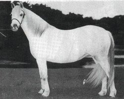 horse Craven Cyrus (Welsh mountain pony (SEK.A), 1927, from King Cyrus ox)