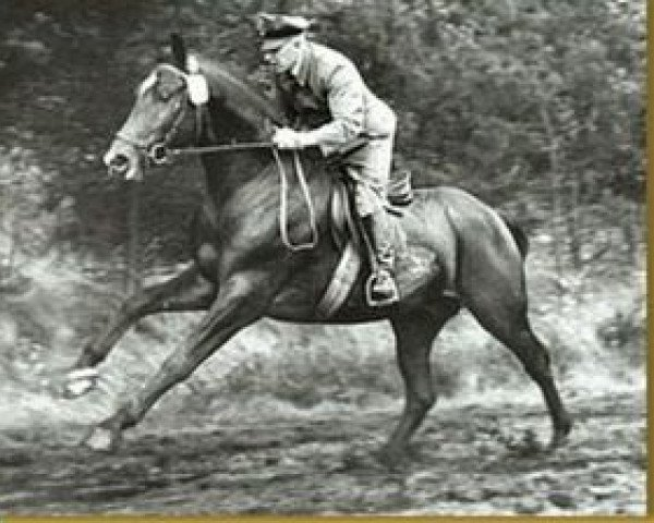 horse Graphit (Hanoverian, 1964, from Grande)