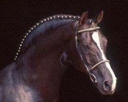 horse Grannus (Hanoverian, 1972, from Graphit)