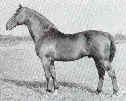 horse Heisssporn (Holsteiner, 1940, from Heintze)