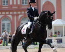dressage horse Show Star (Oldenburg, 1998, from Sandro Hit)