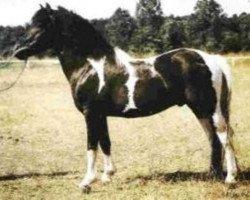 dressage horse Poncho B 387 (Lewitzer, 1973, from Poddi)