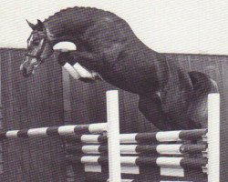 horse Calido I (Holsteiner, 1991, from Cantus)