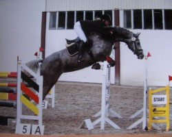jumper Crystal Rock RH (Westphalian, 2007, from Cornado NRW)