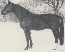 horse Wrede (Hanoverian, 1960, from Frevler)