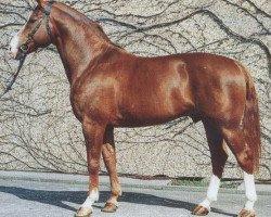 horse Grande Gold (Westphalian, 1977, from Grande)