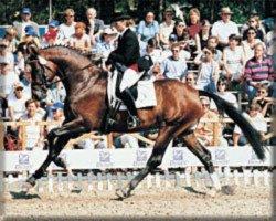 horse Sterntänzer (Oldenburg, 1996, from Silvio I)