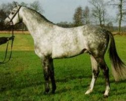 horse Induc (Trakehner, 1990, from Marduc)