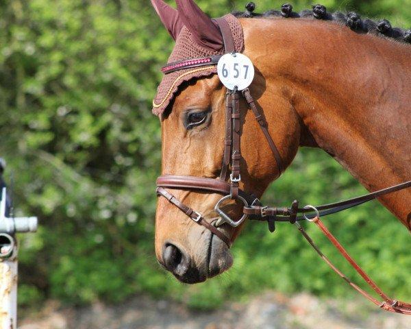 horse Calimero 557 (Bavarian, 2007, from Cantando)