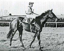dressage horse Bellini xx (Thoroughbred, 1937, from Cavaliere d'Arpino xx)