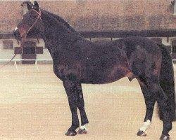 horse Cinzano (Holsteiner, 1977, from Cor de la Bryère)