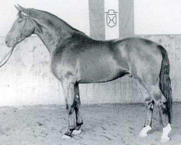 horse Flamberg (Holsteiner, 1968, from Fanfar)