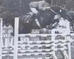horse Conte (Holsteiner, 1961, from Cottage Son xx)
